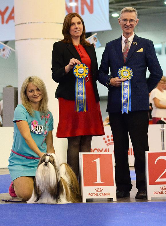 shihtzu_european_winner